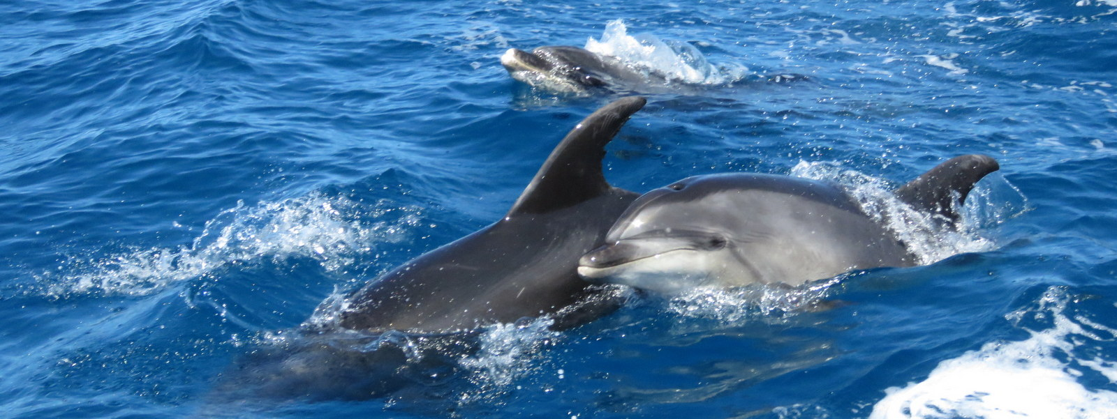 Dolphins are often seen in the park, viewing them in their natural environment is a memorable highlight.
