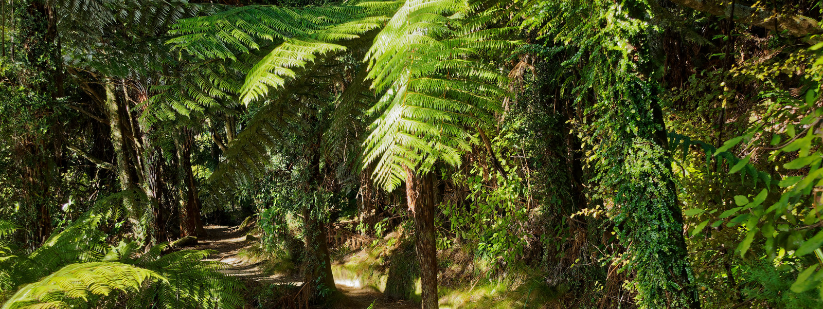 Admire the flora and fauna on the Abel Tasman Coastal Track, one of New Zealand's Great Walks.